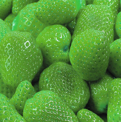 FD797 Green Strawberry Seeds Nutritious Delicious Fruits Seed Strawberries 50PCs