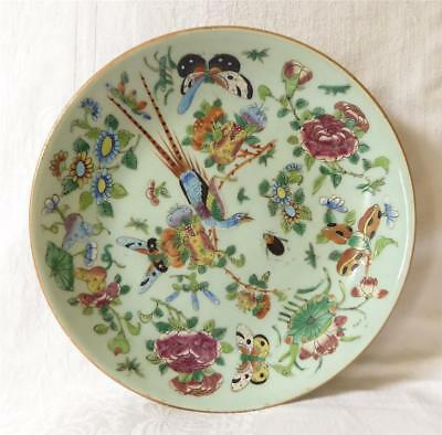 Antique 19Th Century Good Sized Chinese Canton Celadon Porcelain Plate