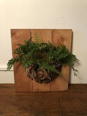 HARES FOOT Fern wooden backing board Mounted plant RARE indoor outdoor