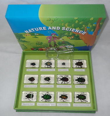 12 Rose Chafer & Scarab Beetle Box Set TES2 12 blocks Education Insect Specimen