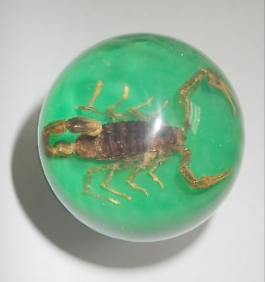 Golden Scorpion Mesobuthus martensii 60 MM Insect Sphere Ball on green bottom
