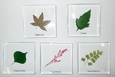 5 Plant Leaf Specimen Box Set B in Clear Square Block Education Kit SSDD74S8