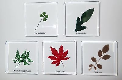 5 Plant Leaf Specimen Box Set A in Clear Square Block Education Kit SSDD74S7