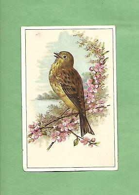 Lovely BIRD On WOOLSON SPICE CO. LION COFFEE Victorian Trade Card