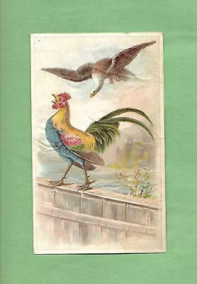 FIGHTING ROOSTER, BALD EAGLE On Unusual LION COFFEE Victorian Trade Card