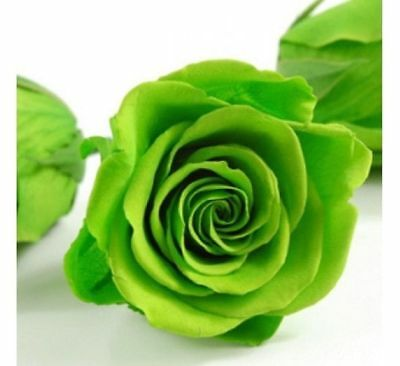 Chinese Green Rose 50PCS Seeds Flower Garden Decoration Bonsai Home Summer Hot