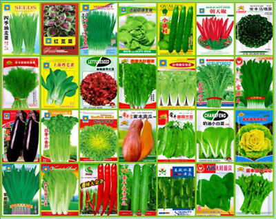 NON-GMO Economic Colorful retail package picture Yard Garden Vegetable Seeds