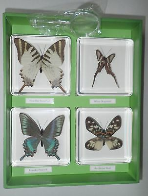 Learning Kit 4 Butterfly Set Maackii Peacock White Dragontail and 2 more # 1733