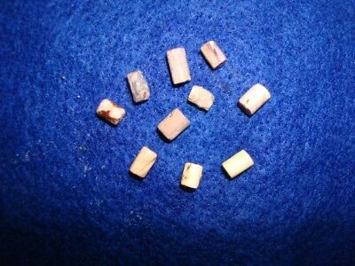 10 Shell wampum beads, Ontario Co, N.Y. Indian artifacts, beads, Pa. N.J., Md.