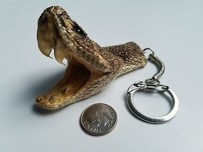 Authentic Rattlesnake Head Keychain - Striking Head with Fangs -Taxidermy