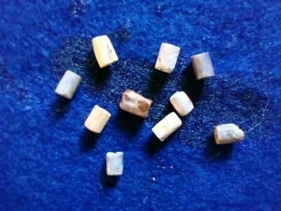 10 Shell Wampum beads, Iroquois Fur Trade Ontario Co, N.Y. artifacts Pa. N.J.,Md