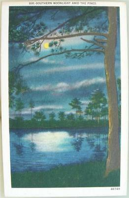 Southern Moonlight Amid The Pines 1950's Postcard UNUSED