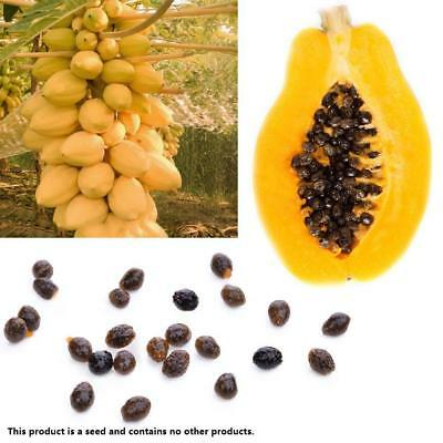 100 pcs True Dwarf Organic Sweet Papaya Seed Bonsai Edible Fruit Plant Swee P7P2