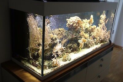 240 liter meerwasser aquarium mit komplettem besatz fischen korallen anemonen eur 395 00. Black Bedroom Furniture Sets. Home Design Ideas