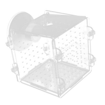 Fish Breeding Isolated Box Hatching Incubator Fish Separate Aquarium Tank