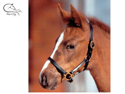 """Waldhausen """"Star"""" Foal Leather Adjustable Headcollar Halter FREE DELIVERY"""