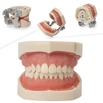 kilgore Nissin Type Dental Typodont Model 200 with Removable Teeth Teaching kit