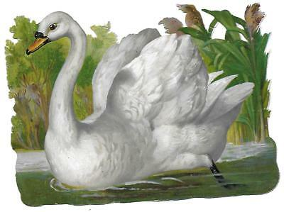 Antique Victorian Diecut Scrap Large Swan Swimming by the Reeds 1890s