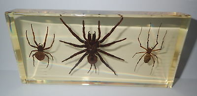 3 Spider Collection Set Tarantula & Ghost  & Golden Silk Spider Amber Clear