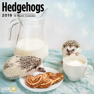 Hedgehogs 2019 Wall Calendar Cute Animal Pet Hedge Hog Fun Hat Photography Gift
