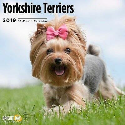 Yorkshire Terrier 2019 Wall Calendar Dog Puppy Cute Pet Animal Gift Photography