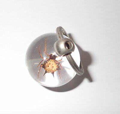 Ball Shape Insect Key Ring Spiny Spider Gasteracantha kuhlii Specimen Clear