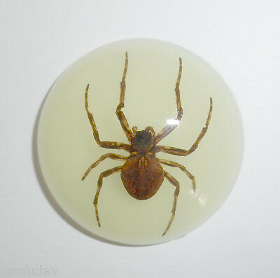 Insect Cabochon Ghost Spider Specimen 35 mm Round Glow 1 piece Lot