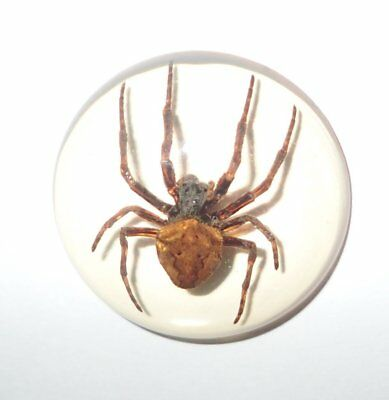 Insect Cabochon Ghost Spider Specimen 35 mm Round clear 1 piece Lot