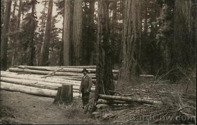 RPPC Idaho Lumber Scene Logging Real Photo Postcard AZO