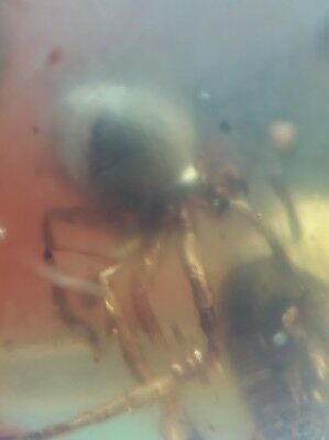 Burmite amber insect,collection,interesting,teaching free shipping,very rare#f54