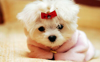 1p Auction Cute Puppy HD Wallpaper Image Penny Auction Collection No Reserve