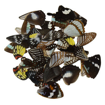 50 Pcs Butterfly Wings DIY Artwork Jewelry Hand Craft Supplies Multicolor Random
