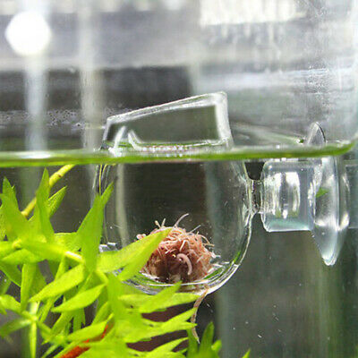Aquarium Fish Tank Aquatic Plant Glass Cup Crystal Red Shrimp Holder +Sucker