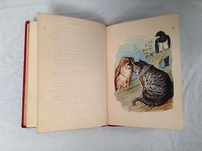 Harrison Weir, Tales From Catland by An Old Tabby, 1853 Hand Painted Engravings