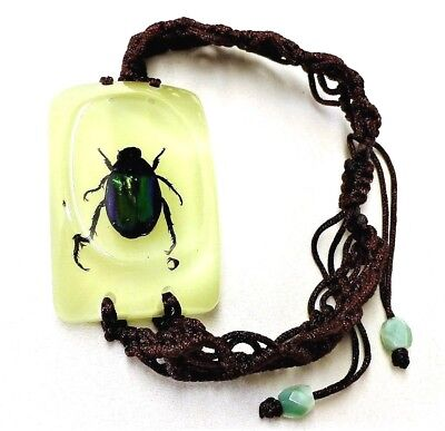 Green Beetle Insect Bracelet in Resin Specimen Collection
