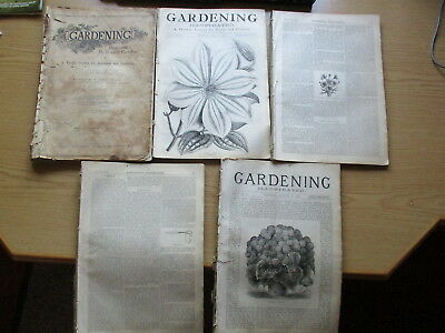 GARDENING ILLUSTRATED FOR TOWN AND COUNTRY, VOLUME 1 - 15/3/1879 to 28/2/1880