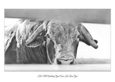 """He's Not Watching You Cause He Loves You"" 5X7 Print ROBYN COOK~PBR Bull Series~"