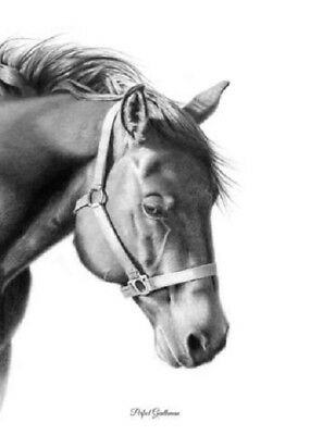 """""""Perfect Gentleman"""" 5X7 Mini Print~ROBYN COOK PENCIL ARTIST~Horse Drawing~Signed"""
