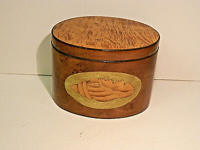 Georgian Oval Yew Wood tea caddy with marquetry shell inlay circa 1795