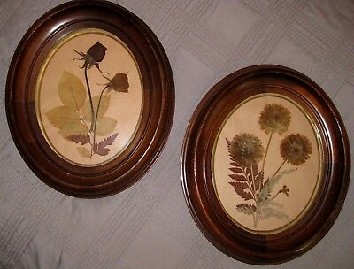Pair of Matching Antique Oval Walnut Vintage Frames & Glass with Dried Flowers