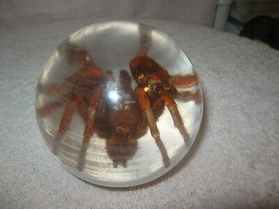 Tarantula Spider Paperweight In Acrylic Great Conversation Piece 12 In. Round