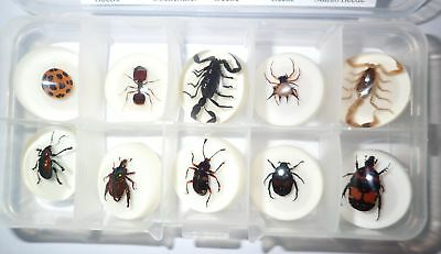 10 Insect Collection Set 25 MM Round Cabochon on WHITE in clear plastic box