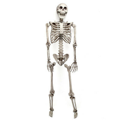 "35"" Halloween Party Decoration Poseable Human Bones Prop Skull Skeleton"