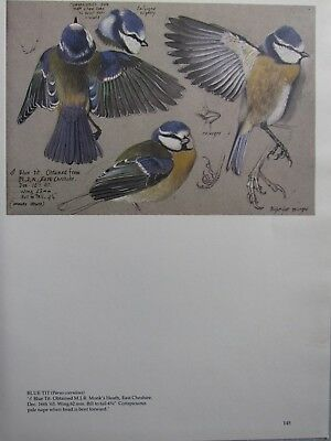 Choice of Blue Tit or Thrush with Wired Feet woodland Artificial Birds Box of 6