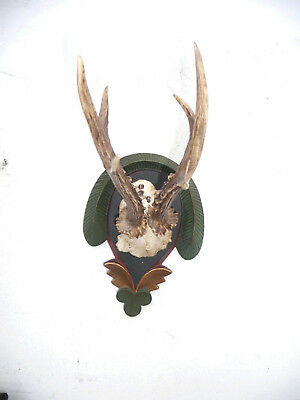 Beautiful Black Forest Baroque Style Carved And Designed Roe Deer Antlers Mount