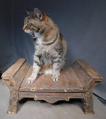 Antique Eastlake Country Victorian GRUNGY CRUSTY PAINT Footstool Cat Bed Vintage
