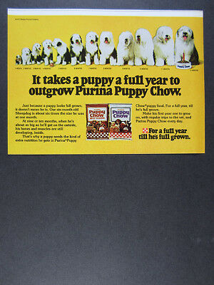 1978 Old English Sheepdog photos Purina Puppy Chow dog food vintage print Ad