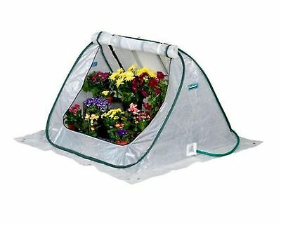 SeedHouse 4 ft. x 4 ft. Pop-Up Greenhouse Home Outdoor Plant Flower Veges Garden
