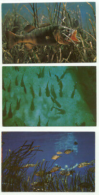 Silver Springs FL Underwater View Of Fish Lot of 3 Vintage Postcards  - Florida