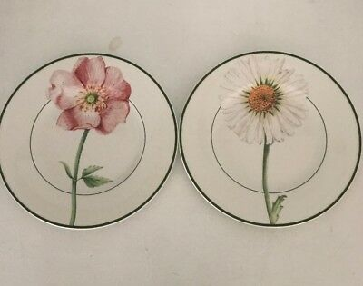 """VILLEROY & BOCH Flora Country Collection Set of 2 Salad Plates Daisy & Rose 8.5"""""""